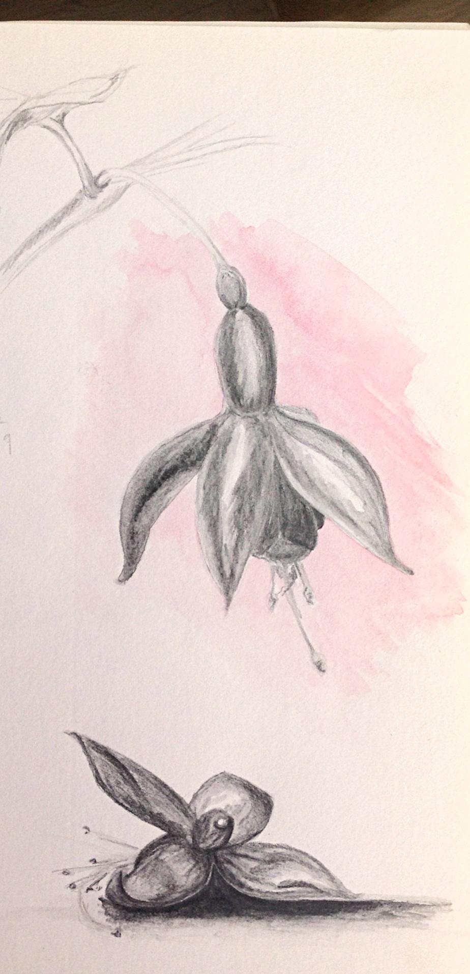 Image-1 (13)